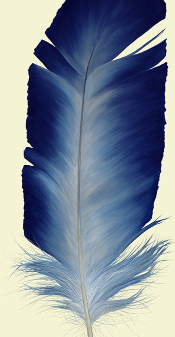 Steller Blue Feather